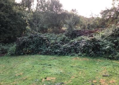 Garden Clearance in Meopham, Kent