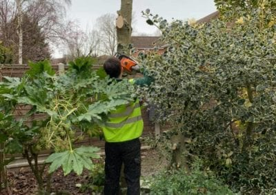 Tree Reduction & Removal in Strood