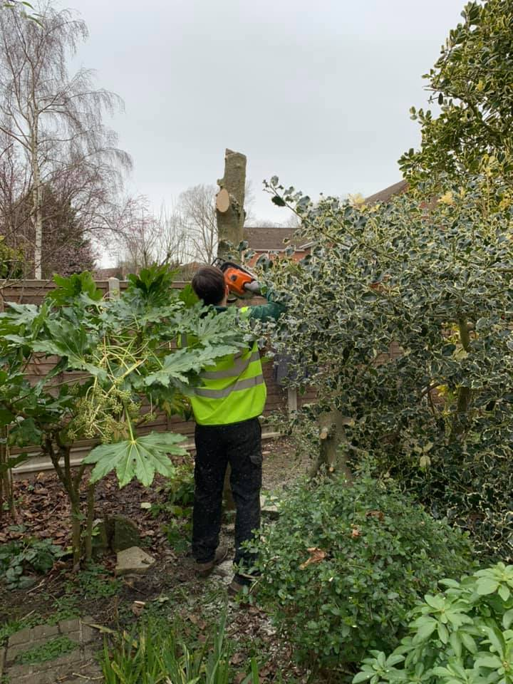 One of our tree surgeons removing a tree from a garden in Strrod Kent