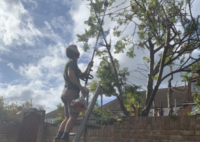 Tree Reduction in Gillingham