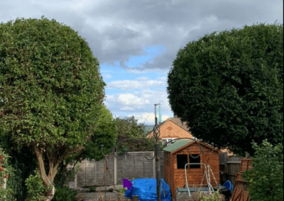 Tree  pruning, Strood