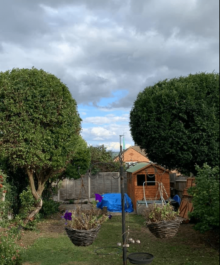 Freshly shaped trees, part of our tree pruning services. Strood Kent